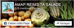 Amap Reims ta salade - Reims